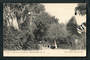 Postcard of a View in the Christchurch Botanical Gardens. - 48443 - Postcard