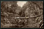 Undivided Real Photograph of Bush Scene West Coast. - 48791 - Postcard