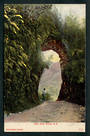 Coloured postcard of the Fern Arch Buller. - 48817 - Postcard