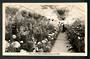 Real Photograph by A B Hurst & Son of Conservatory Public Gardens Oamaru. - 49510 - Postcard