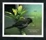 MICRONESIA 1998 Birds. Miniature sheet. - 50967 - UHM