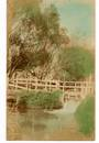 Tinted Real Photograph of stream Otaki. - 69529 - Postcard
